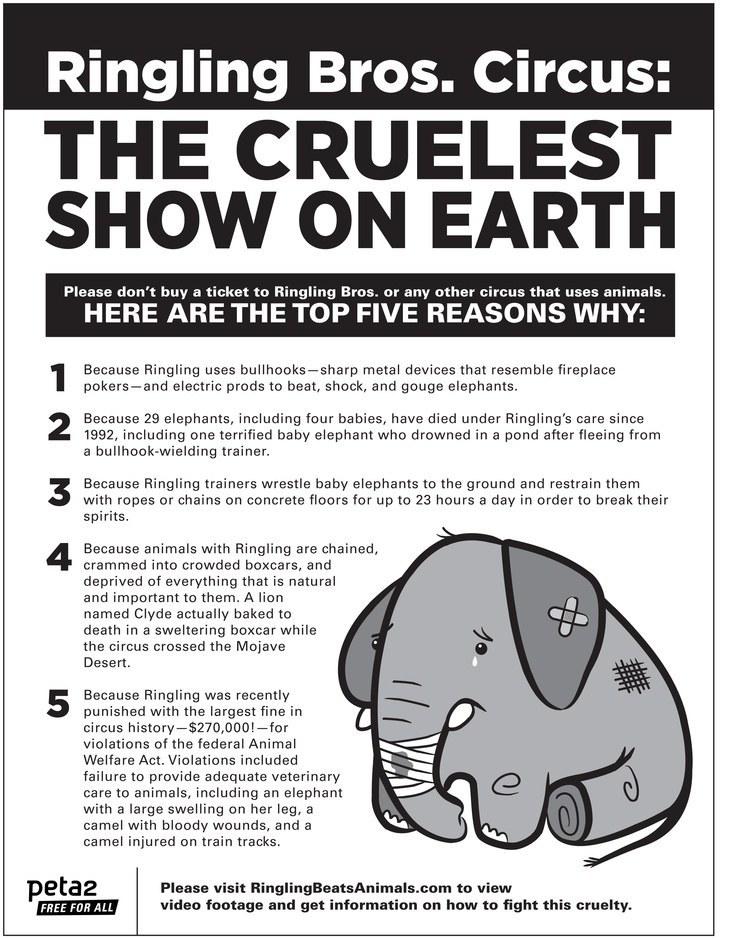 Persuasive essay on animal cruelty