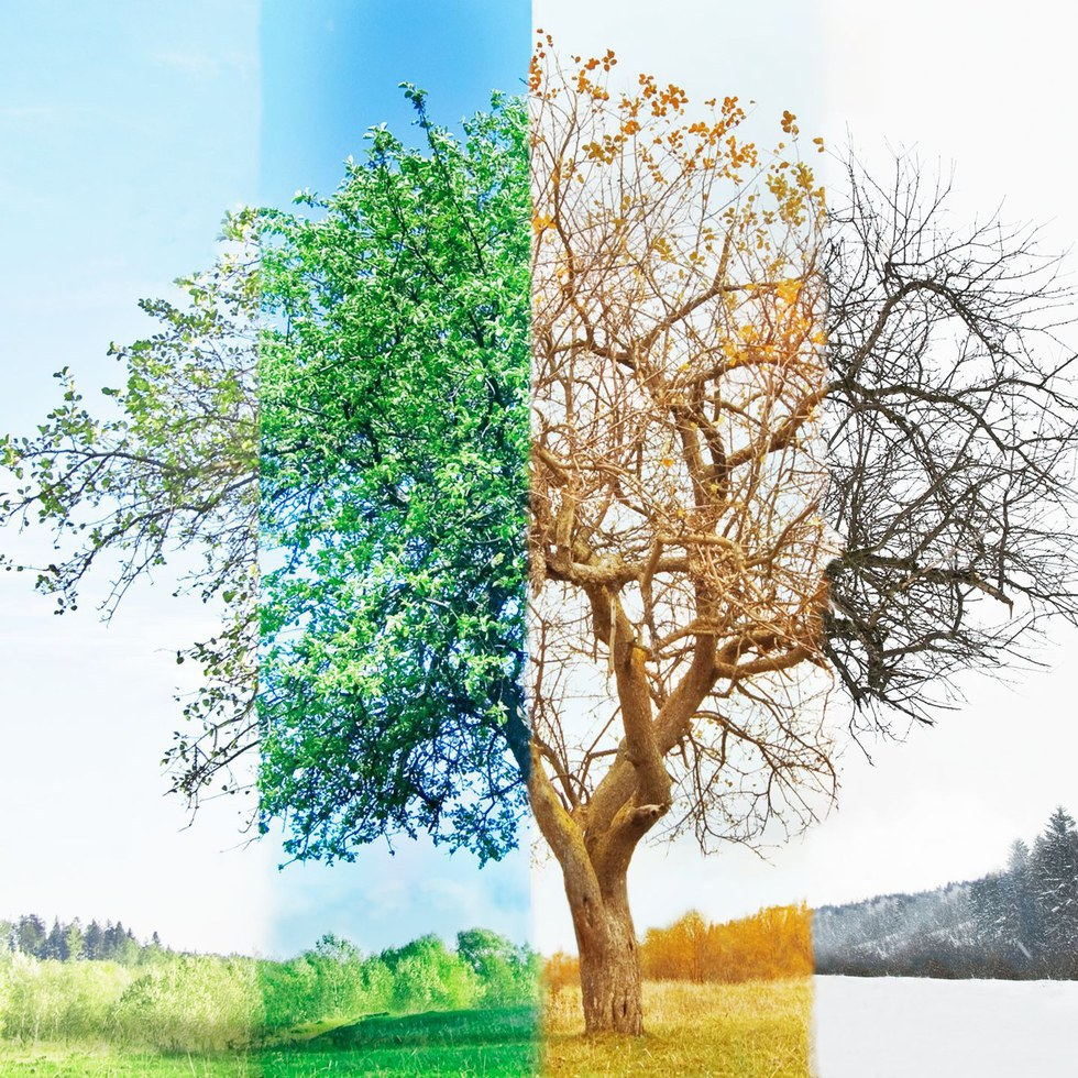 Printable pictures of the 4 seasons 4 Seasons Images, Stock Photos Vectors Shutterstock