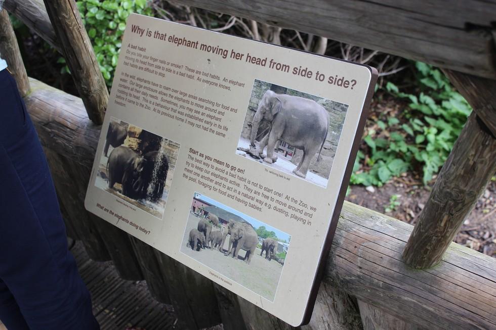 americas zoos essay