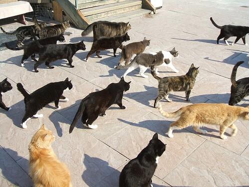 Raps Cat Sanctuary Love Meow