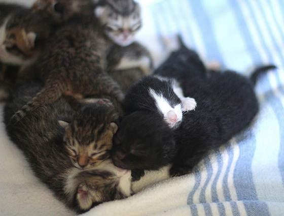 Cat To Shelter Wobbly Eyes