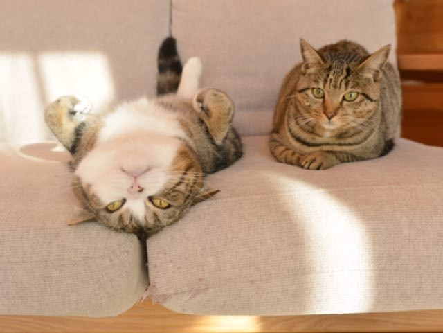 hobie cat for sale
