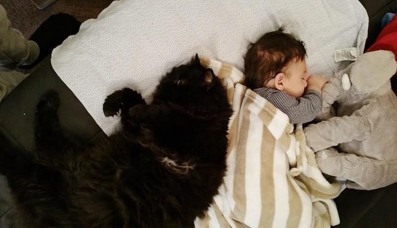cat keeps newborn baby safe snuggle cuddle