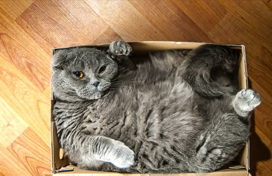 15 cats who refuse to accept that their boxes are too