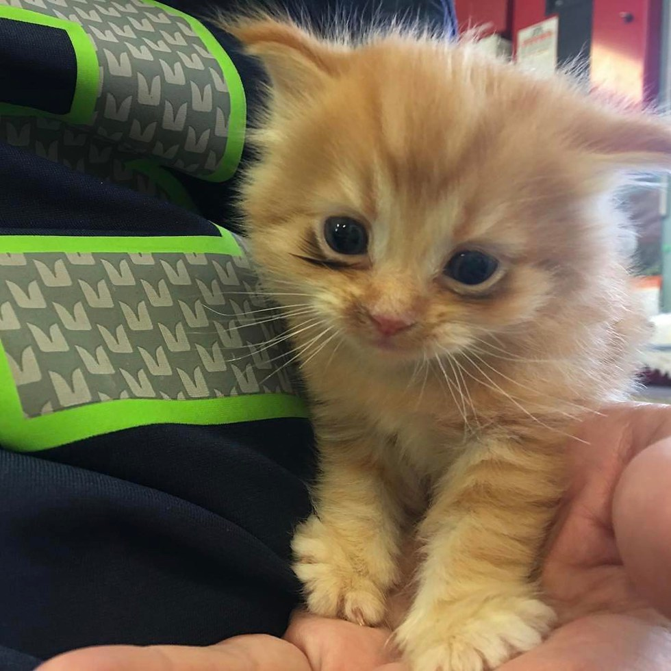 Kitten Lost ly Place He Knew Tells Foster Mom How Happy He is
