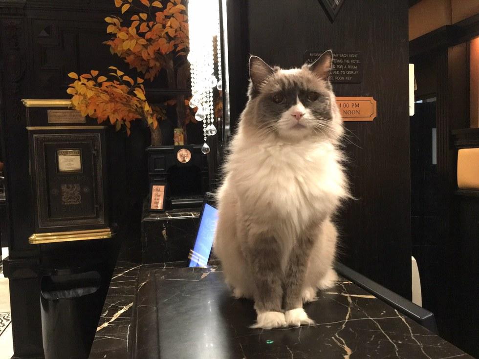 Cat Supervises Hotel f...