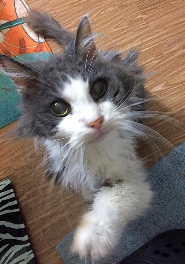 19 Year Old Unwanted Cat Can T Stop Purring After Couple