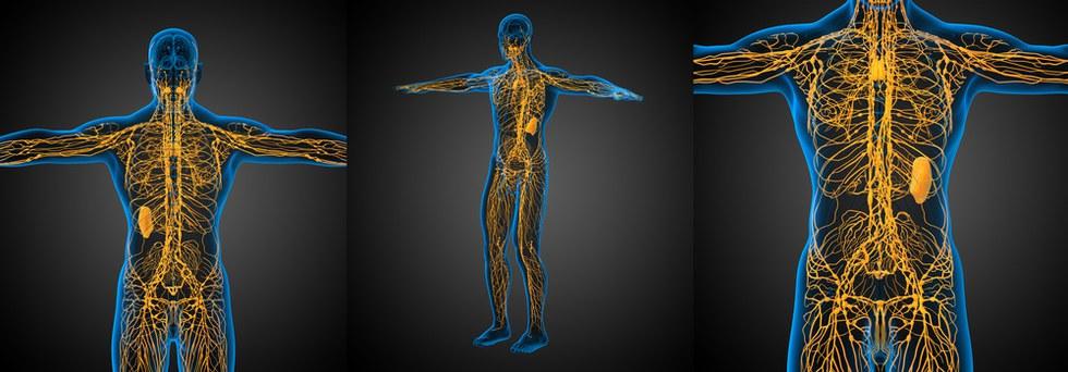 Zeichen für ein verstopftes Lymphsystem und 10 Wege, dieses zu ...
