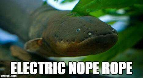 14 honest animal names we wish were real azula for the