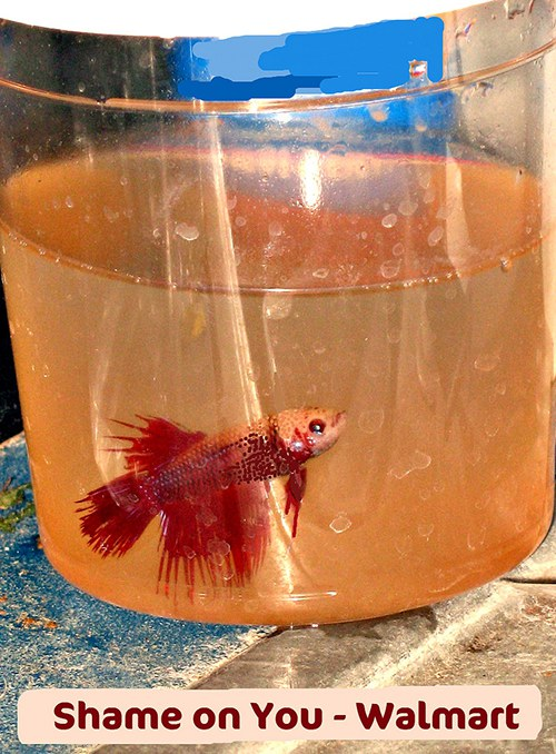 meet the woman trying to save walmart s fish azula for the love