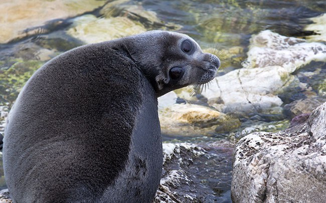 Lake Baikal Animals The 5 Coolest A...