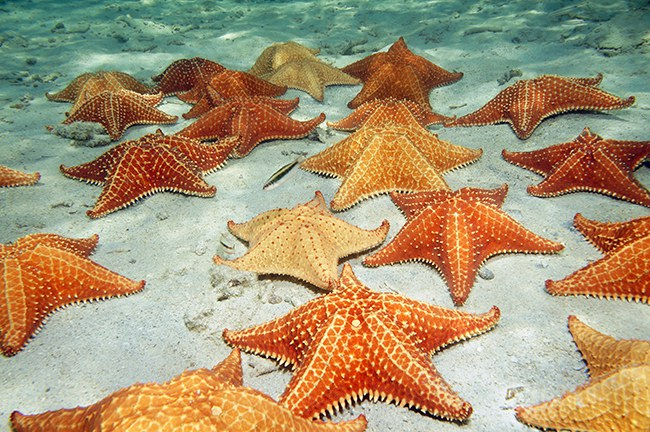 Image of: Cute 1 Sea Stars Azula Awwdulting The Moments Ocean Animals Claim independence Day