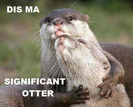 18 Otter Memes That Will Make You Lol Azula For The Love Of Oceans