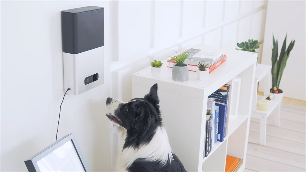 Picture of Petcube bites and a dog eating.