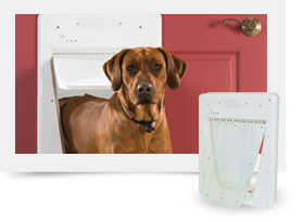 Picture of petsafe smartdoor and a dog.