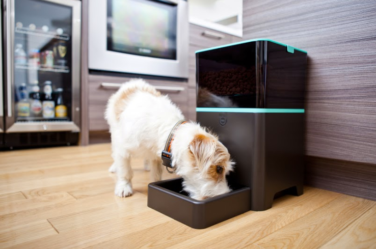 Picture of Petnet's smartfeeder and a dog eating.