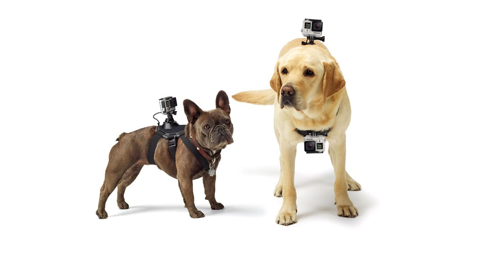 Picture of two dogs with GoPro Fetch.