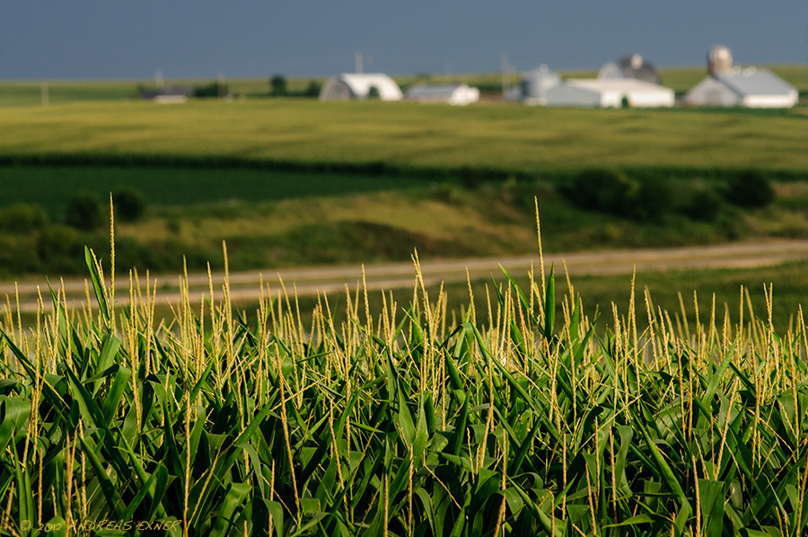 10 Fun Facts You Didn't Know About Iowa