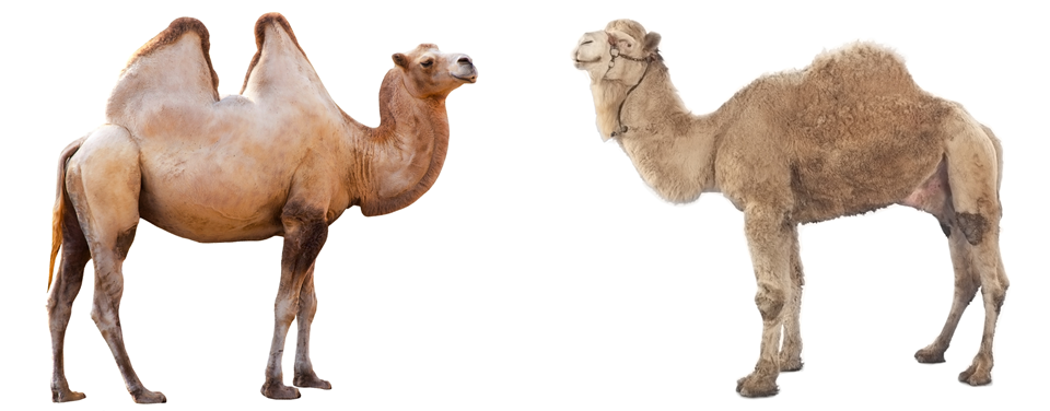2 So Whats With The Humps