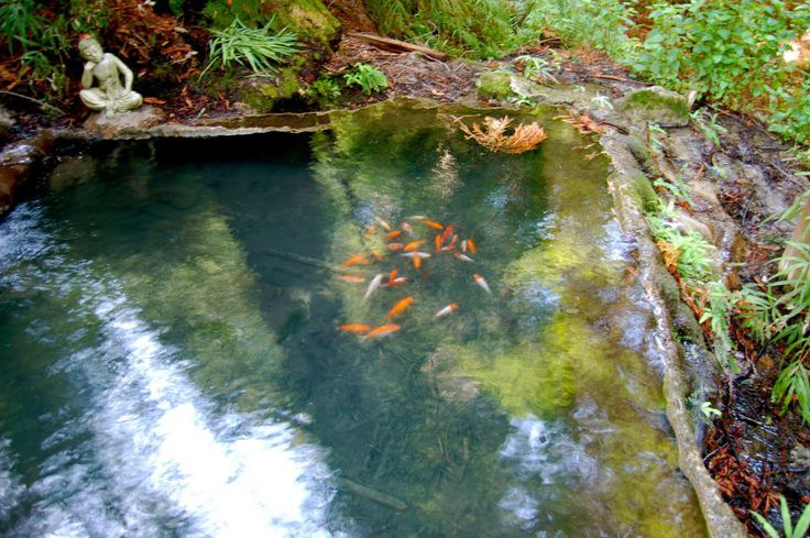 Uc santa cruz cool spots and myths for Where to buy koi fish near me