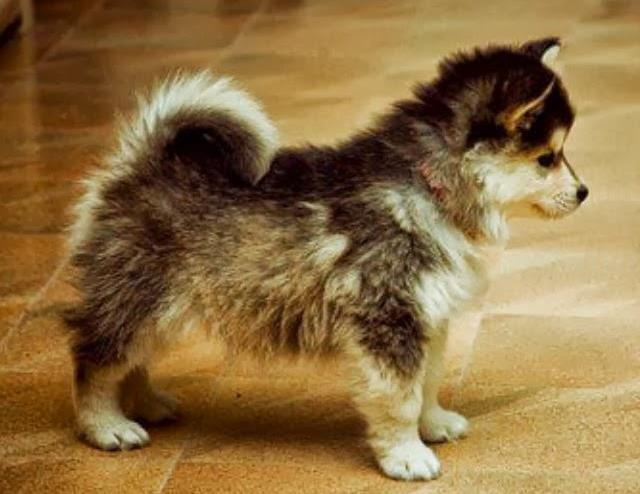 10 crossbred puppies that are too cute for life