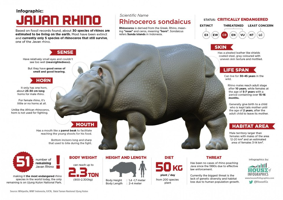 the five types of rhinoceros and their endangerment Species success: rhinos recover african rhinoceros populations are on the rise both types of african rhino have two horns protruding from their snouts.