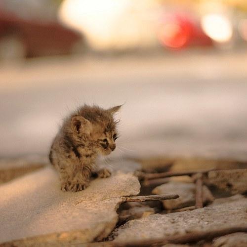 Can Cats Sense You Re Sad