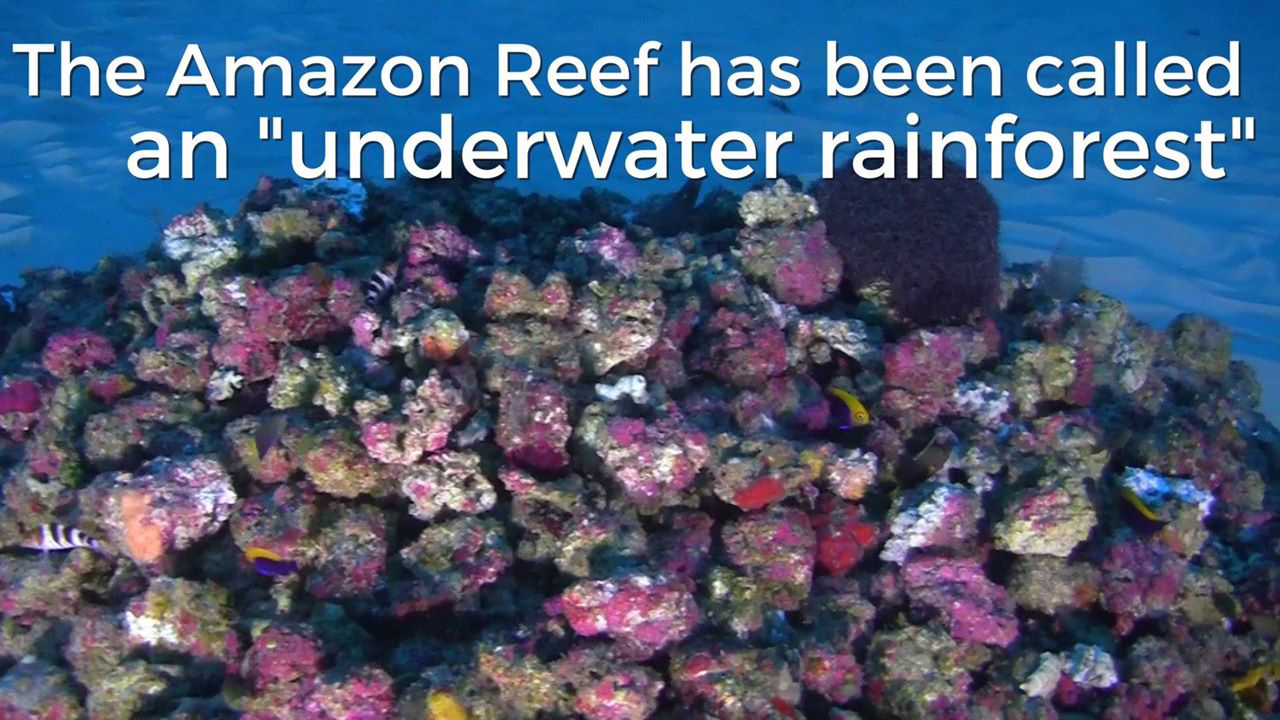 Total s Application to Drill Near Amazon Reef Rejected