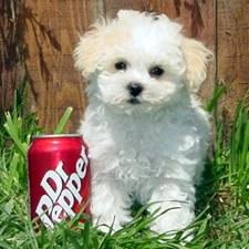 Mixed Breed Dog Stuffed Animals Poochon