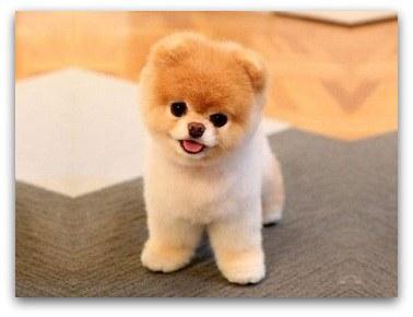 most cute dog