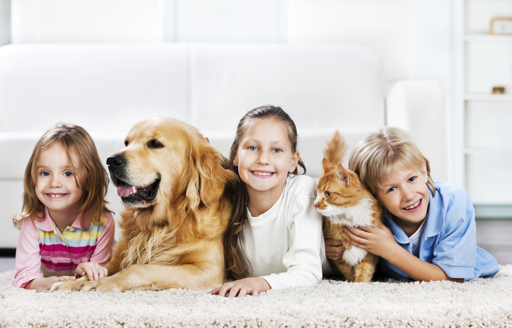 6 Reasons Why Pets Are Family