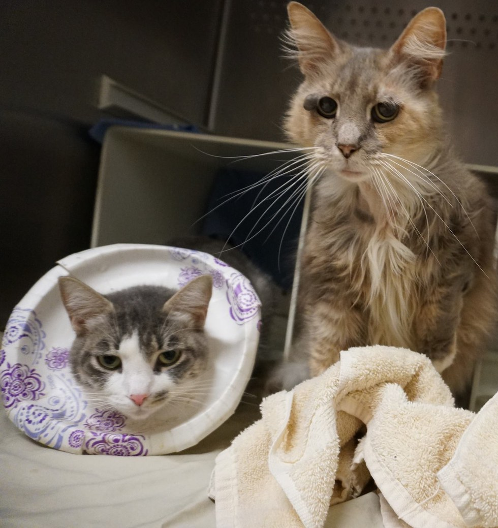 9-year-old Shelter Cat Bats Sad Eyes, Chirps Aloud Trying