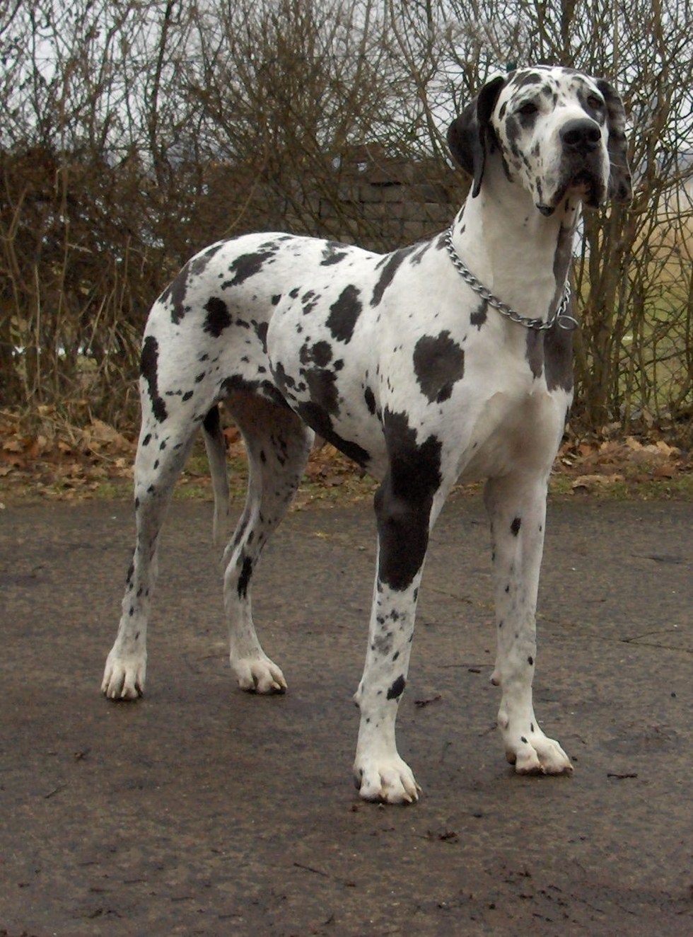 HUGE Dog Breeds You May Never Have Seen Before - 29 cutest dog photos existence