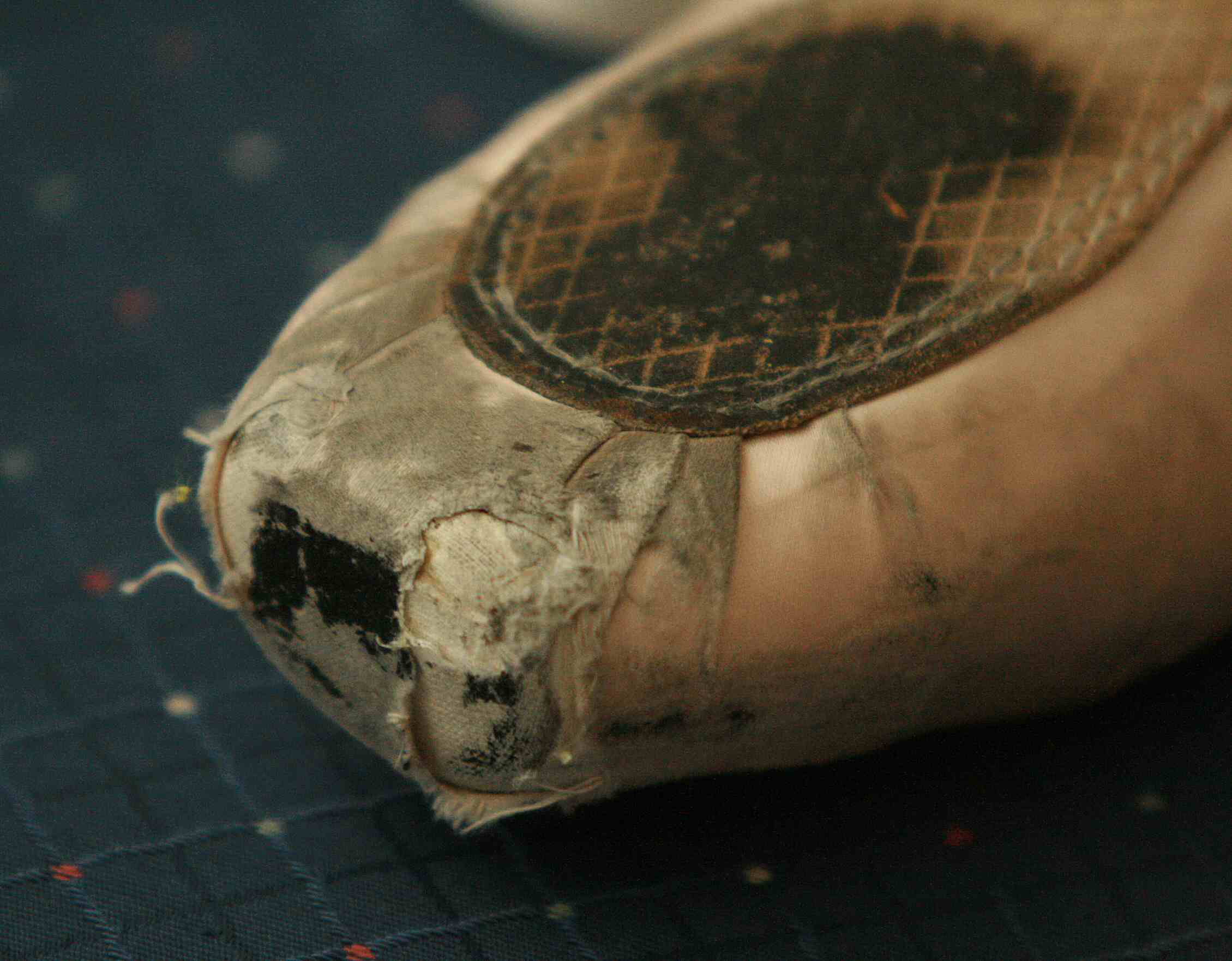 Ask Amy: How to Superglue Pointe Shoes - Pointe