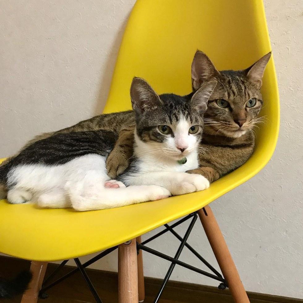Prende in stallo 2 gattini ma poi a casa accade qualcosa for I gattini piccoli