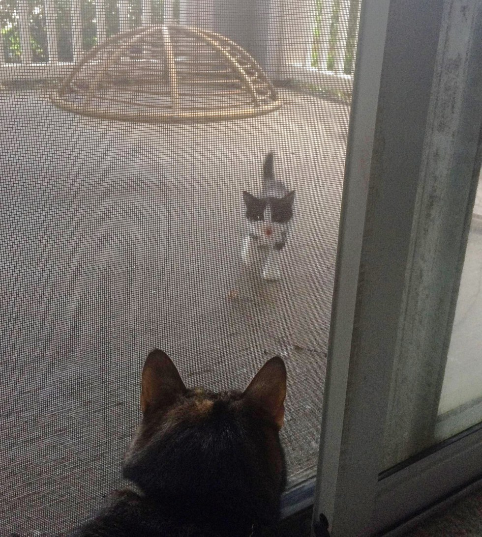 Share using Facebook ... & Stray Kitten Shows Up on Patio Meowing to Open the Door Now 2 ...