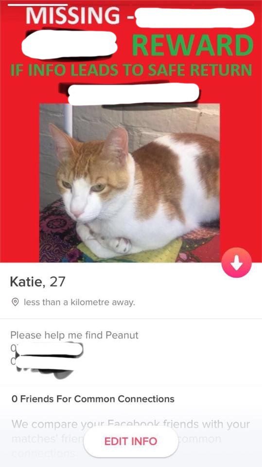 dating with a cat