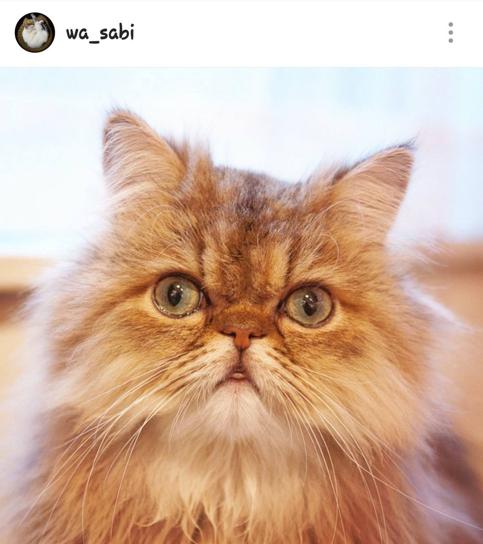 11 cats you need to follow on instagram immediately