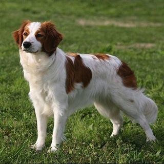 Almost Extinct Sheperd Dog Breed