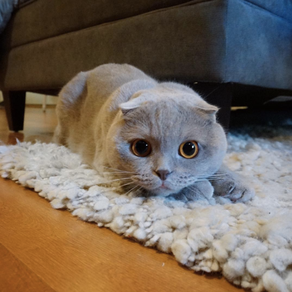 Animals With Better Insta Game Than You - Venus cat two faces making twice adorable