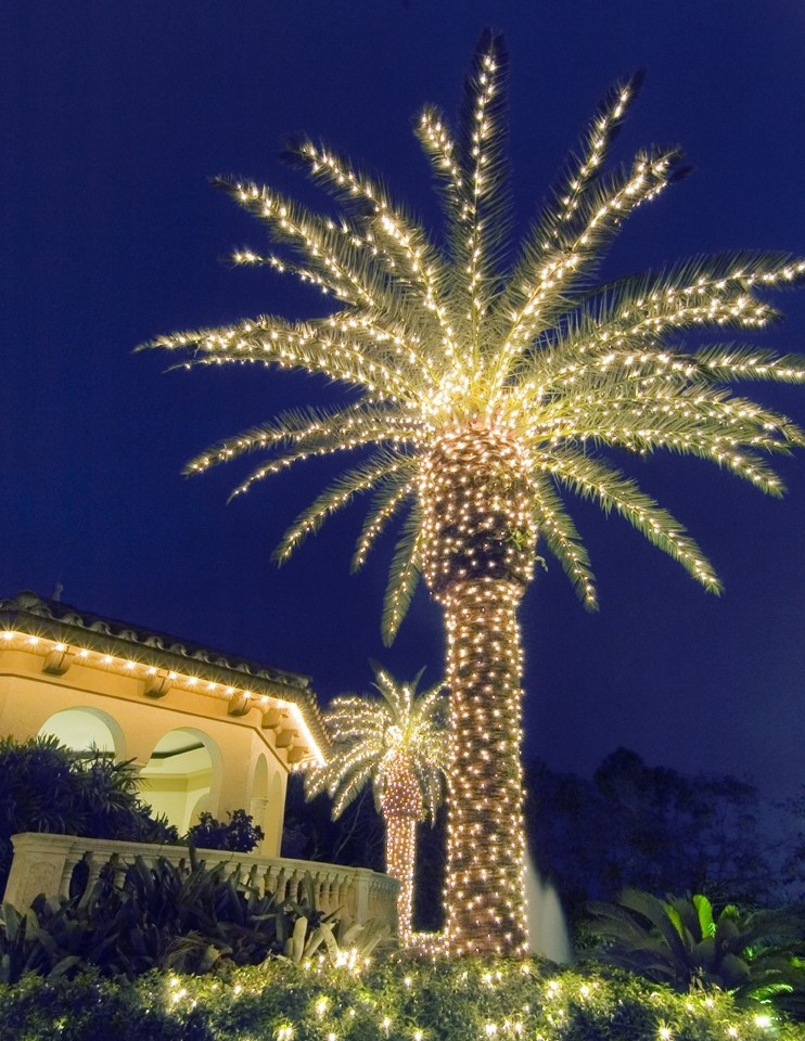 your oak and cedar trees most florida residents have palm trees in their yards so a lot of residents deck out their yards and palm trees with lights - Palm Tree With Christmas Lights