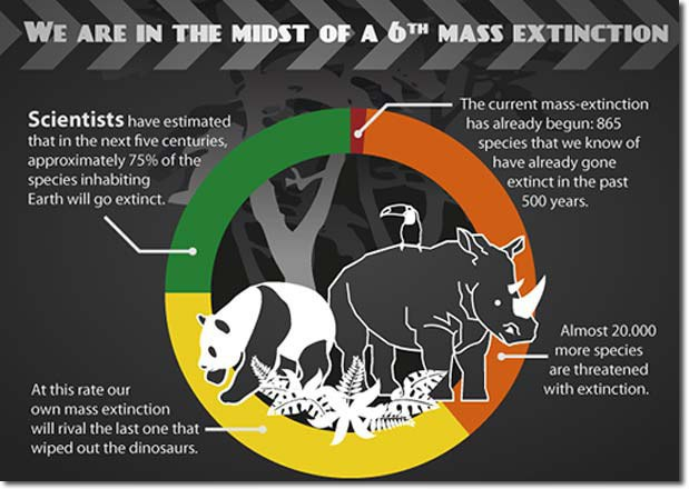 humans effect on extinction