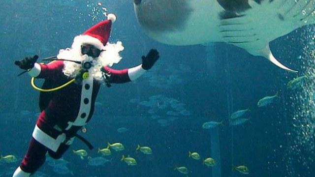 Top Christmas Attractions In Atlanta - 6 amazing underwater attractions
