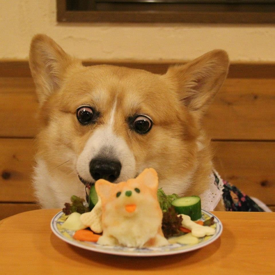 Can Dogs Eat A Whole Fish