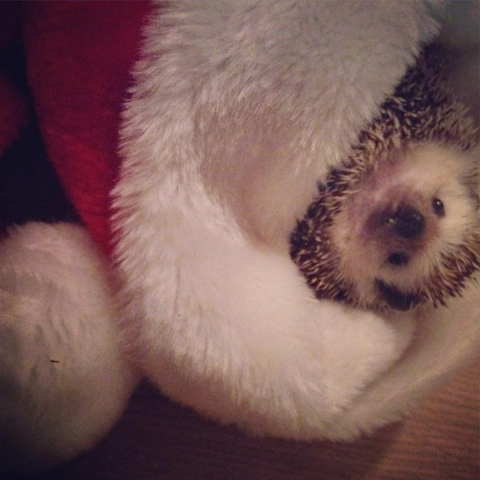 hedgehog mouth tumor