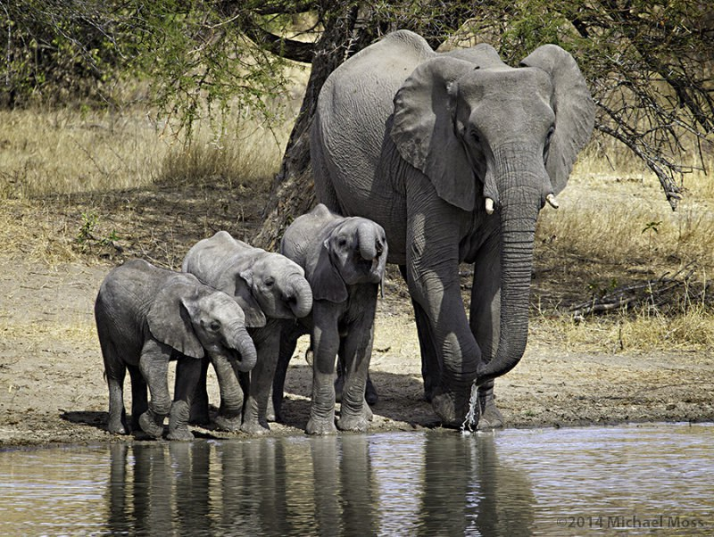 5 Reasons We Love Elephants - photo#35