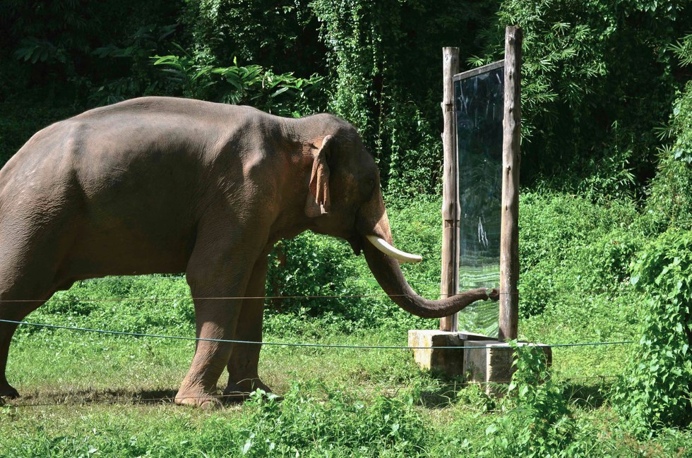 how to own and elephant Elephants are large mammals of the family elephantidae and the order proboscidea three species are currently recognised: the african bush elephant.