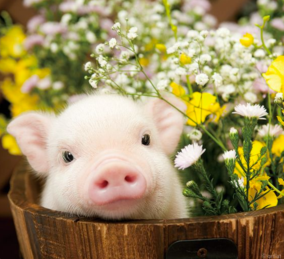 16 piggies to brighten up your day