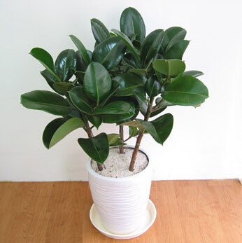 Pretty indoor plants that are impossible to kill - Pretty indoor plants ...