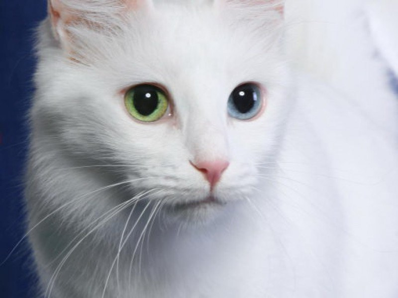Manx Cats Are Named After